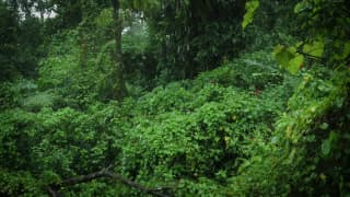 Rainforest Rain Sounds for Sleeping or Studying White Noise Rainstorm on FREECABLE TV